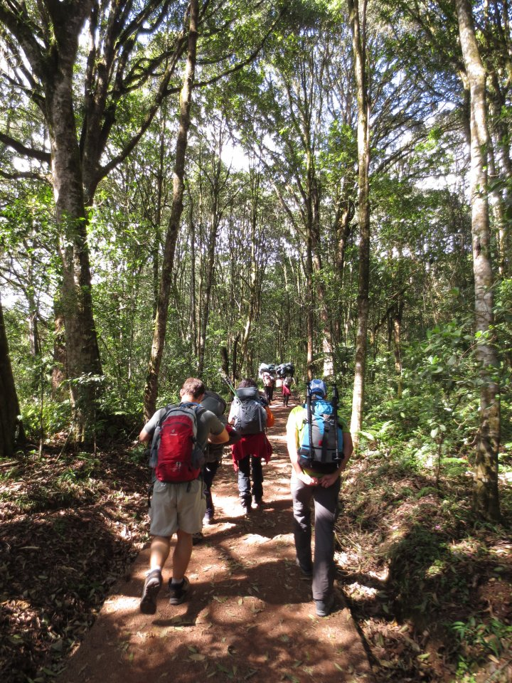 Picture of d1-Machame Gate to Machame Camp