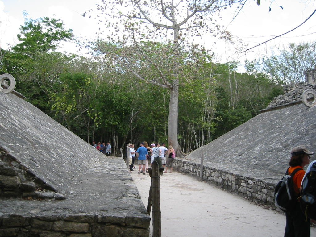 Picture of Coba